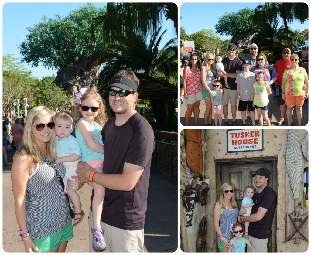 disney recap, animal kingdom